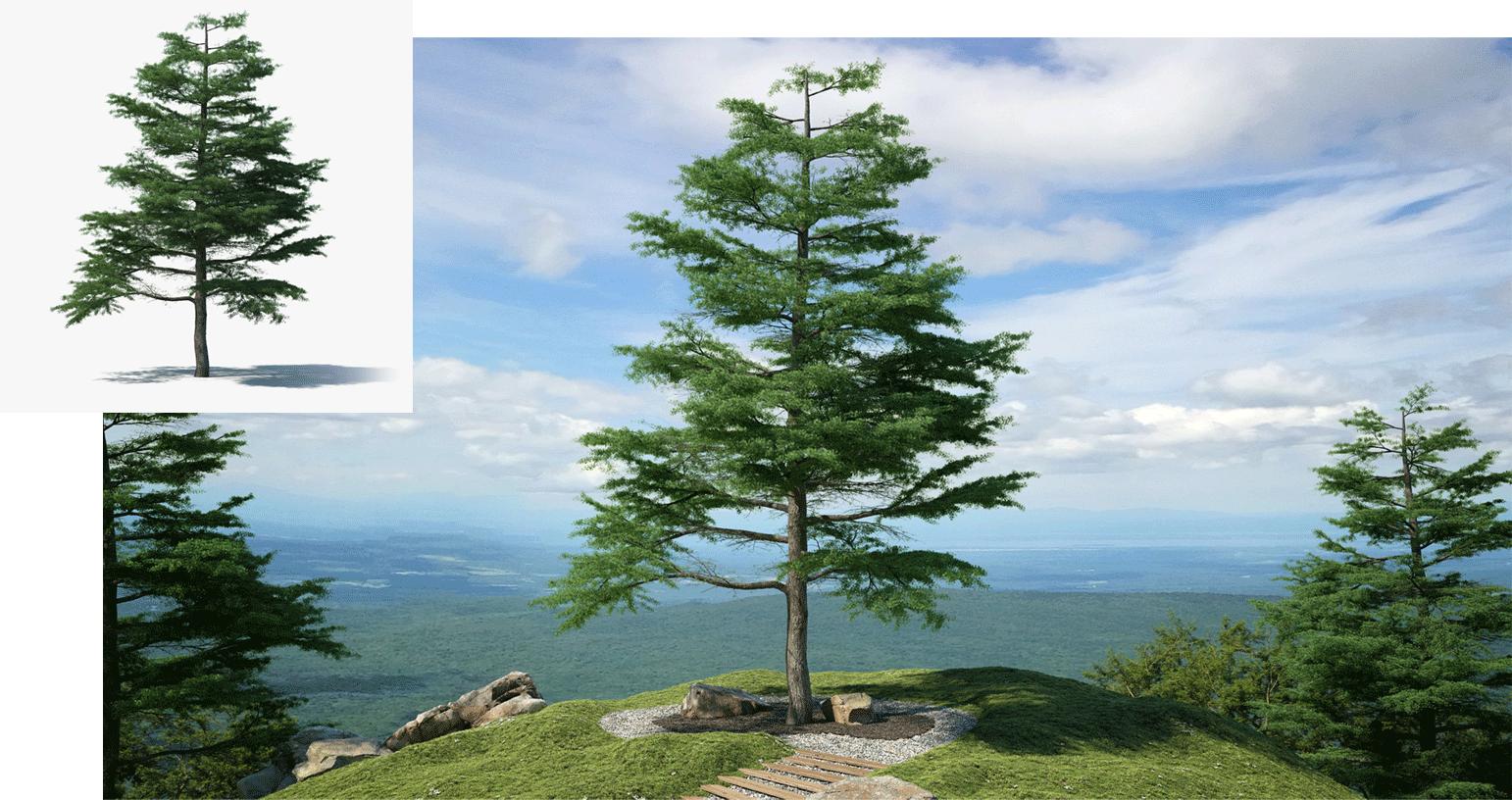 Tree 3D model in context image on TurboSquid