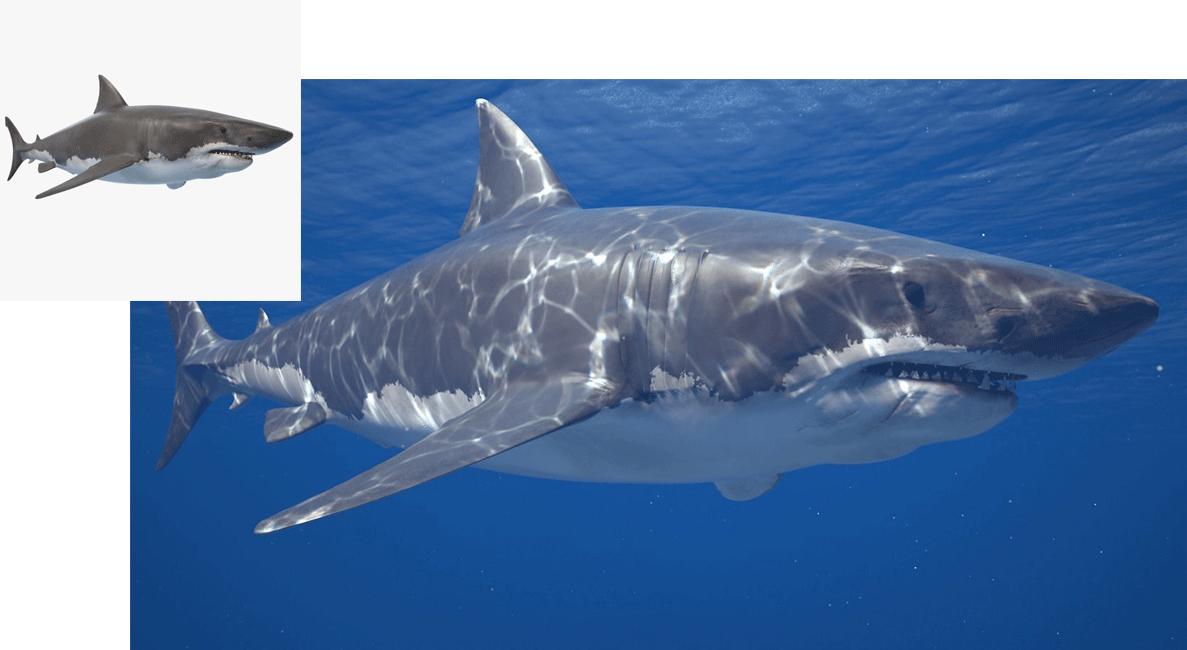 Shark 3D model in context image on TurboSquid