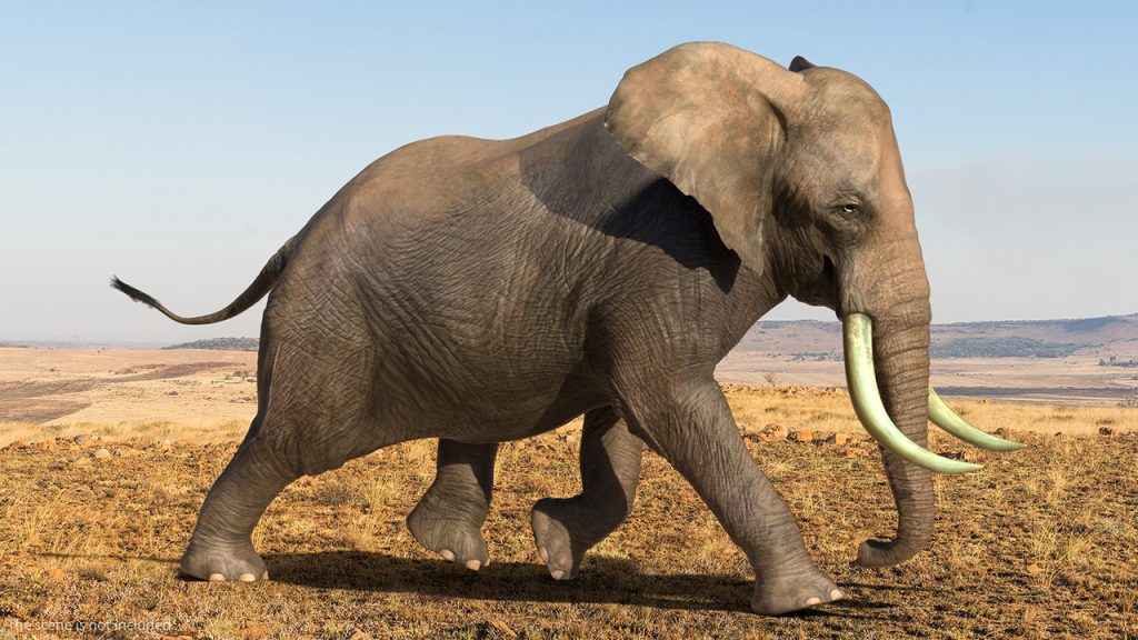 3D Model of Elephant in Context